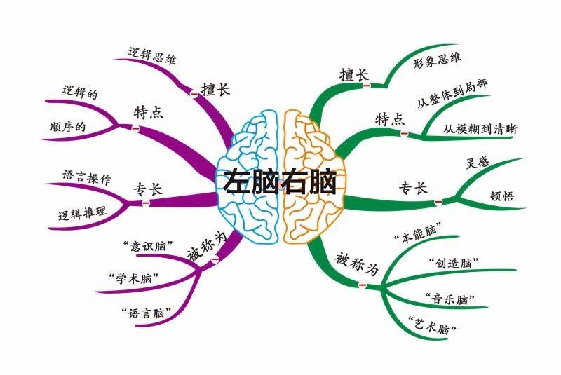 右脑单词记忆法_【TED】男女大脑不同,台湾女教授的解释让你从头笑到尾 - 尚忆 ...